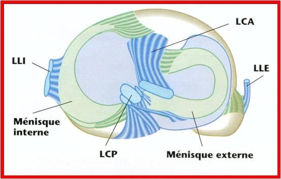 arthroscopie